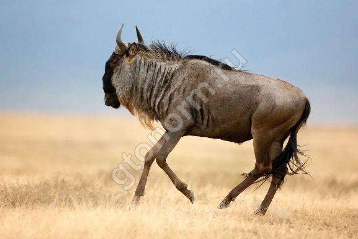 самое низкое животное в мире